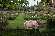 A floral-patterned umbrella held by a visitor to gardens, on 29th May 2017, in Greenwich park, London, England.