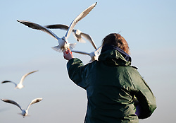 © Licensed to London News Pictures. <br /> 16/01/2015. <br /> <br /> South Gare, United Kingdom<br /> <br /> Alison Wake feeds seabirds at South Gare at Teesside. Alison has been coming to the same spot for five years to feed the birds with waste but healthy scraps of food.<br /> <br /> Photo credit : Ian Forsyth/LNP