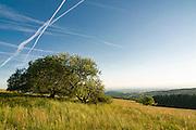 Naturschutzgebiet, Kondensstreifen, Hoherodskopf, Vogelsberg, Hessen, Deutschland | nature reserve, Hoherodskopf, Vogelsberg, Hesse, Germany