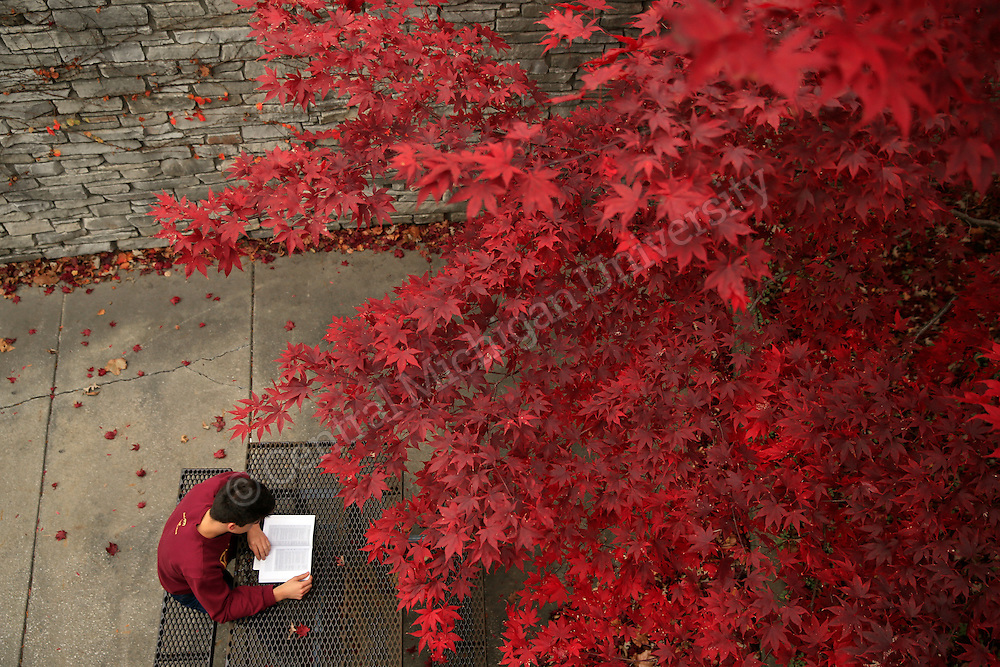 Scott Norcross, marketing and logistics management student from Mt. Pleasant, studies outside of the University Center on a very mild November day on the campus of Central Michigan University. Photo by Steve Jessmore/Central Michigan University