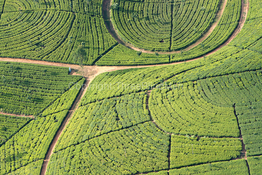 Sri Lanka. Tea estate from the air.