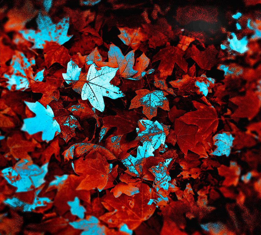 3D leaves in Lambertville, New Jersey.