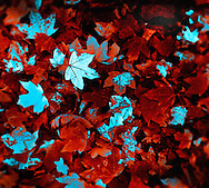 3D leaves in Lambertville, New Jersey.