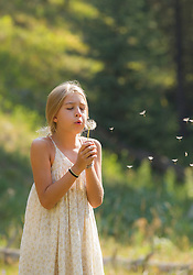 little girl blowing a dandelion outdoors