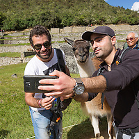 Peru, Hikers take selfie snapshots with Llama wandering amid Inca ruins at Machu Picchu