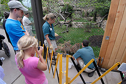 Philadelphia Zoo, Big Cat Falls, trainers working with young lions..Philadelphia, Pennsylvania, PA USA.  Photo copyright Lee Foster, 510-549-2202, lee@fostertravel.com, www.fostertravel.com. Photo 251-30634
