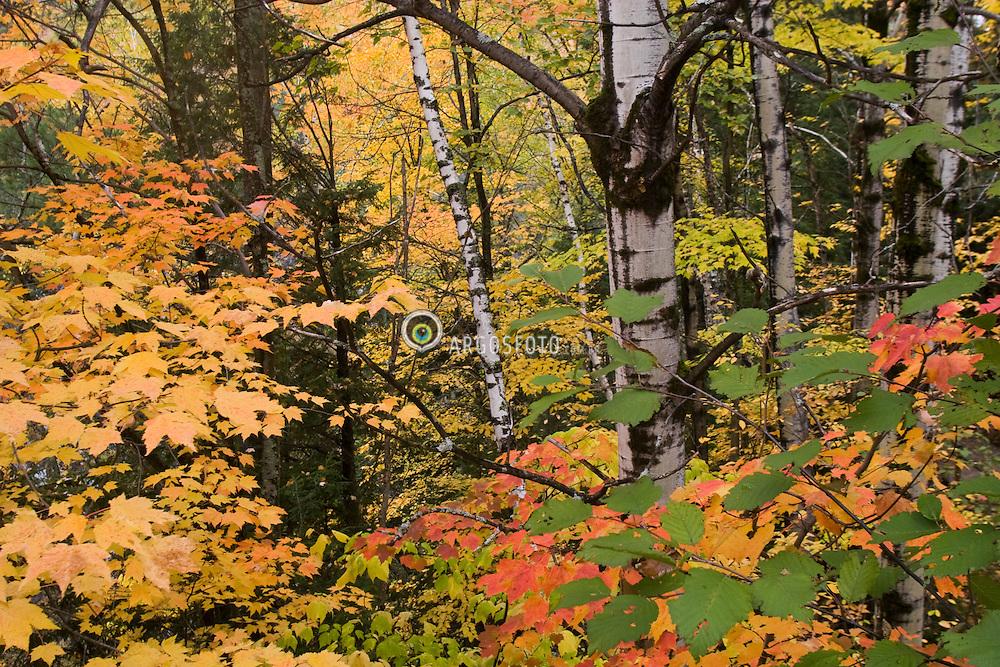 Beaupre, QC, Canada. Canyon Sainte-Anne - The colorful fall foliage / Canion Saint-Anne, localizado a 40 km da cidade de Quebec. As coloridas arvores no outono.
