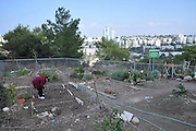 Israel, Haifa, Community Garden, small plots of land are allocated to residence for gardening and farming. Young girls works her plot