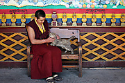 A monk removes burrs from a cat at Ganden Sumtsenling Monastery, Shangri-la, Yunnan, China; September, 2013.