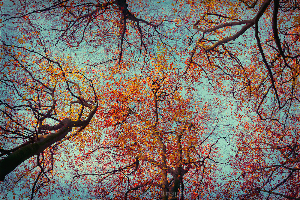 Beech trees in morning light on a november day - texturized photograph