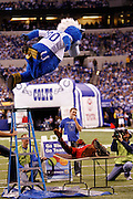 The Indianapolis Colts mascot leaps onto the Houston Texans mascot prior to the NFL week 8 football game against the Houston Texans on Monday, November 1, 2010 in Indianapolis, Indiana. The Colts won the game 30-17. ©Paul Anthony Spinelli
