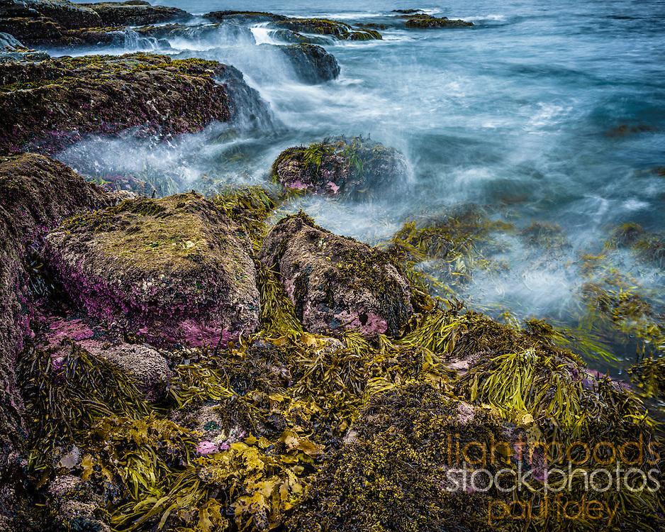 Seaweed Shoreline, Gerringong Boat Harbour, East Coast Australia.