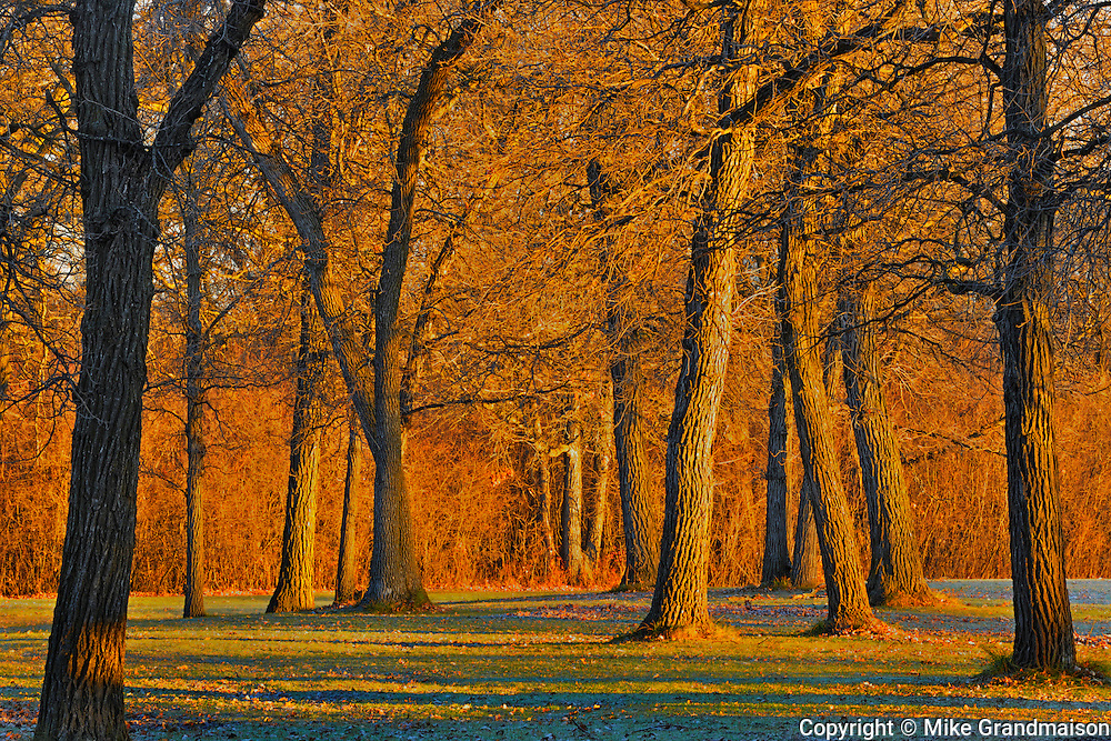 Trees at sunrise<br /> La Barriere Provincial Park<br /> Manitoba<br /> Canada