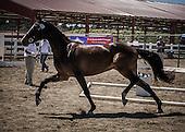 Horse No 44