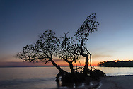 """I call this images """"Three Mangroves."""" It's an isolated mangrove along a stretch of Camp Lulu Key in the Ten Thousand Islands, adjacent to Everglades National Park."""