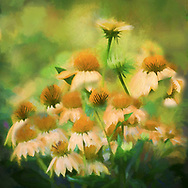 Painterly rendition of sunlit yellow coneflowers on a bright green background