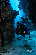 divemaster leads a group through coral tunnels in spur and groove formations on the Belize Barrier Reef at Mata dive site, Ambergris Caye, Belize, Central America ( Caribbean Sea )