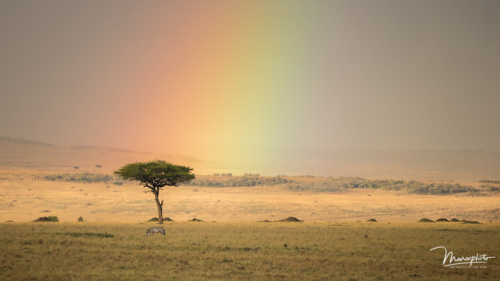 Wilderness images from African landscapes.