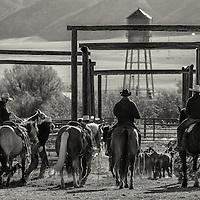 On The Ranch - Portfolio