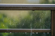 Rain drops of a spider's web