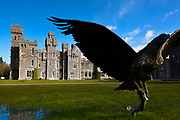 Cong, Ashford Castle is a medieval and Victorian castle that has been expanded over the centuries and turned into a five star luxury hotel and was previously owned by the Guinness family.