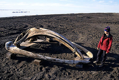 Alaska, Head bones of bowhead whale. Barrow, Alaska.