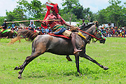 "WEST SUMBA, INDONESIA - <br /> <br /> wood javelins are thrown at opponents while riding a horse <br /> to celebrate the rice planting season<br /> <br /> Sumba peoples ride a horse throw wood javelin during war horse called Pasola Festival in West Sumba, Indonesia. Pasola is a game played by the Western Sumbanese to celebrate the rice planting season. The game is played by throwing wooden spears to the opponent while riding a horse. The game is played by two different groups of men from different clans or tribes. It is a game that requires a high skill at horse riding and spear throwing skill.<br /> It ends up in a bloody game when the wooden spear hit the bare flesh of the participant. In the Sumbanese ancient beliefs, the spilled blood will fertilize the land and multiply the output of the paddy. Religiously speaking, the ritual battle of Pasola, is ""essentially a fertility rite. Like the cock-fight, it is designed to shed blood on the earth"". Likewise the people of Sumba, within their religious traditions are ""believers of the spirits of nature and their ancestors"".<br /> ©Raiyani Muharramah/Exclusivepix Media"
