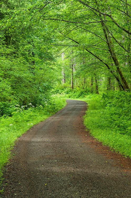 Road, Siuslaw National Forest, Coast Range Mountains, Oregon.
