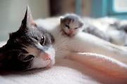 Mother nursing kittens