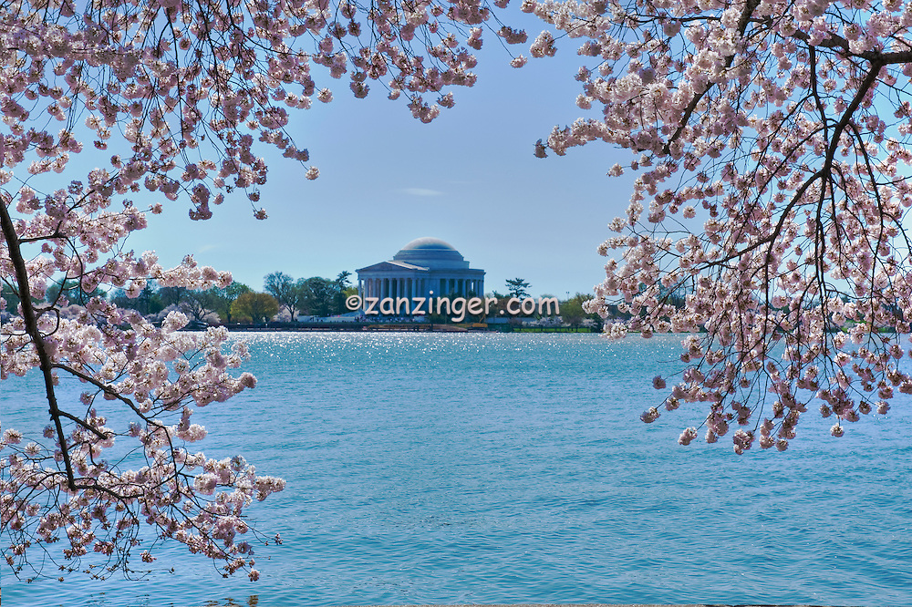 Jefferson  Monument, Spring, District of Columbia, Memorial Parks, National Mall, Tidal Basin, Sakura, Cherry Blossoms, trees, Washington DC, Nations Capital, Beautiful, Unique