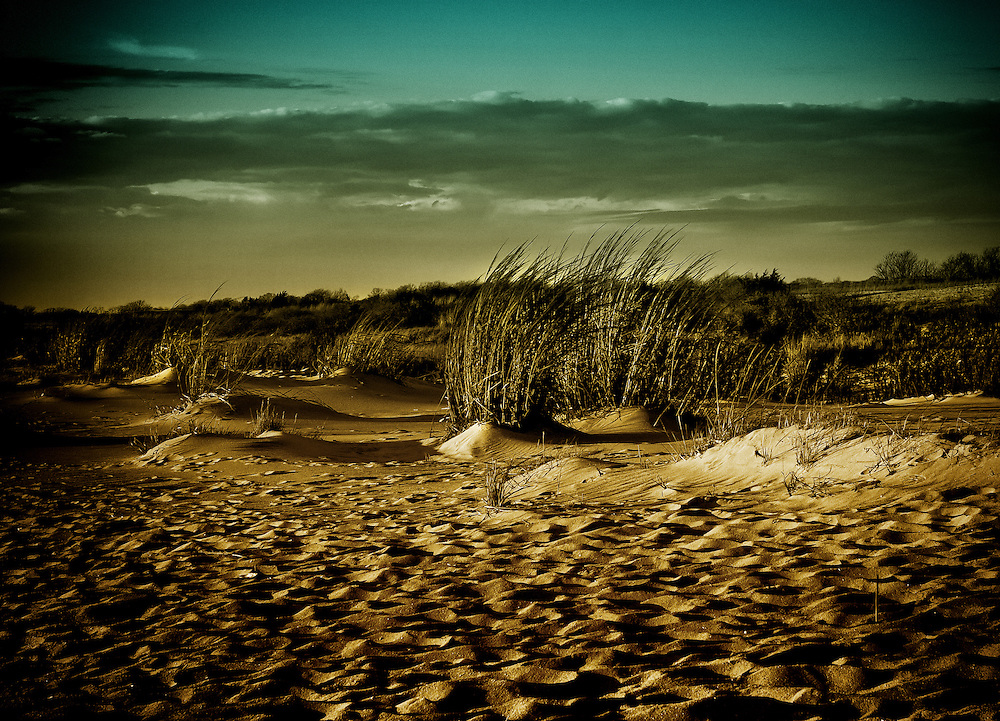 Beach grasses at sunset in Cape May, New Jersey.