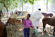 A boy is selling Indian sweets while walking among horses exhibited and traded during the yearly Sonepur Mela, Asia's largest cattle market, in Bihar, India.