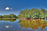 Red Mangroves on an idyllic day on Sanibel Island.