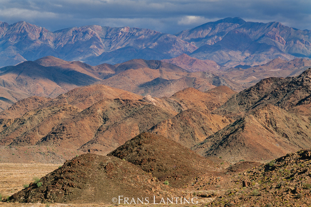 Arid coastal mountains feature high diversity of plant life, Richtersveld National Park, South Africa