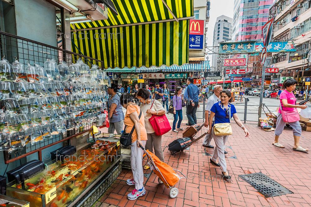 kowloon, Hong Kong, China- june 9, 2014: people at the goldfish market in mong kok