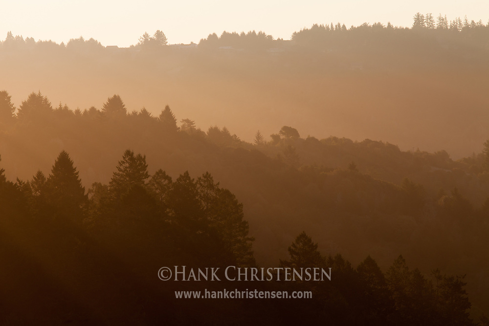 Rays of sun streak through fog, layering hilltops of forest, Sonoma Coast, CA