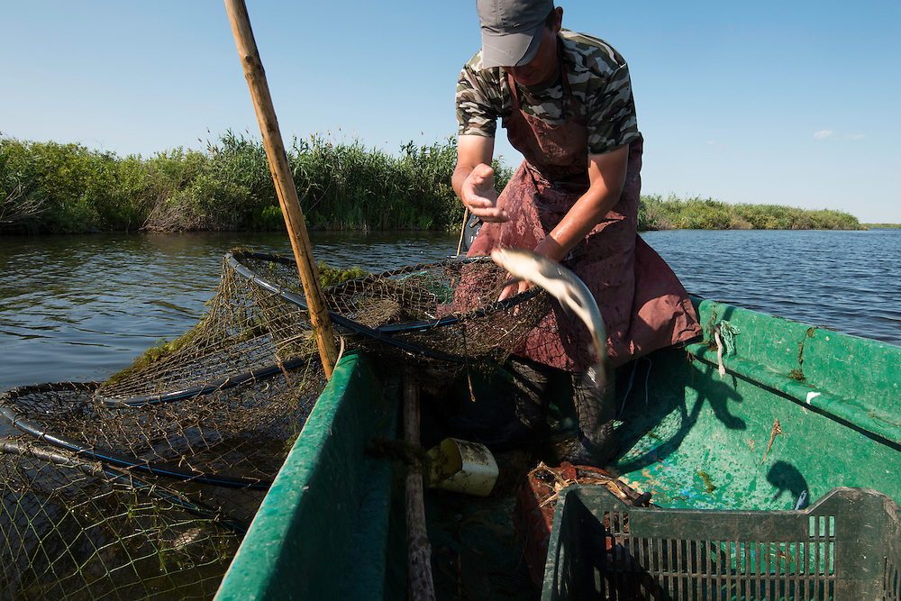 Traditional fishing with fyke net, Danube Delta fisherman, Florin Moisa, Danube Delta, Romania