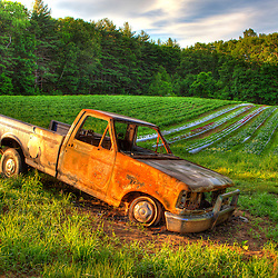An abandoned pick up truck in a field of lettuce at Heron Pond Farm in South Hampton, New Hampshire. HDR.