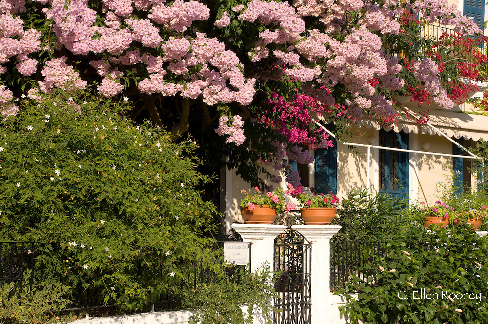 Colourful pink and red bougainvillea growing in front of a house in Fiskardo, Kefalonia, The Ionian Islands Greece