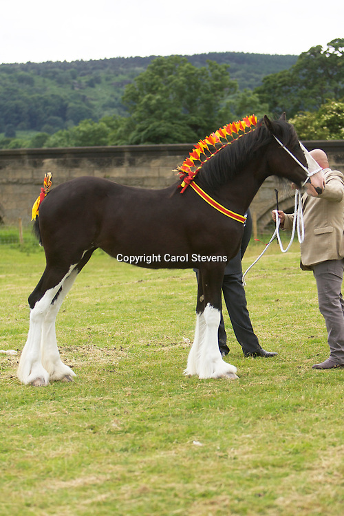 Mr J Cross &amp; Miss N Cross's Black Filly  Crossingtons Inkatink  f 2012<br />