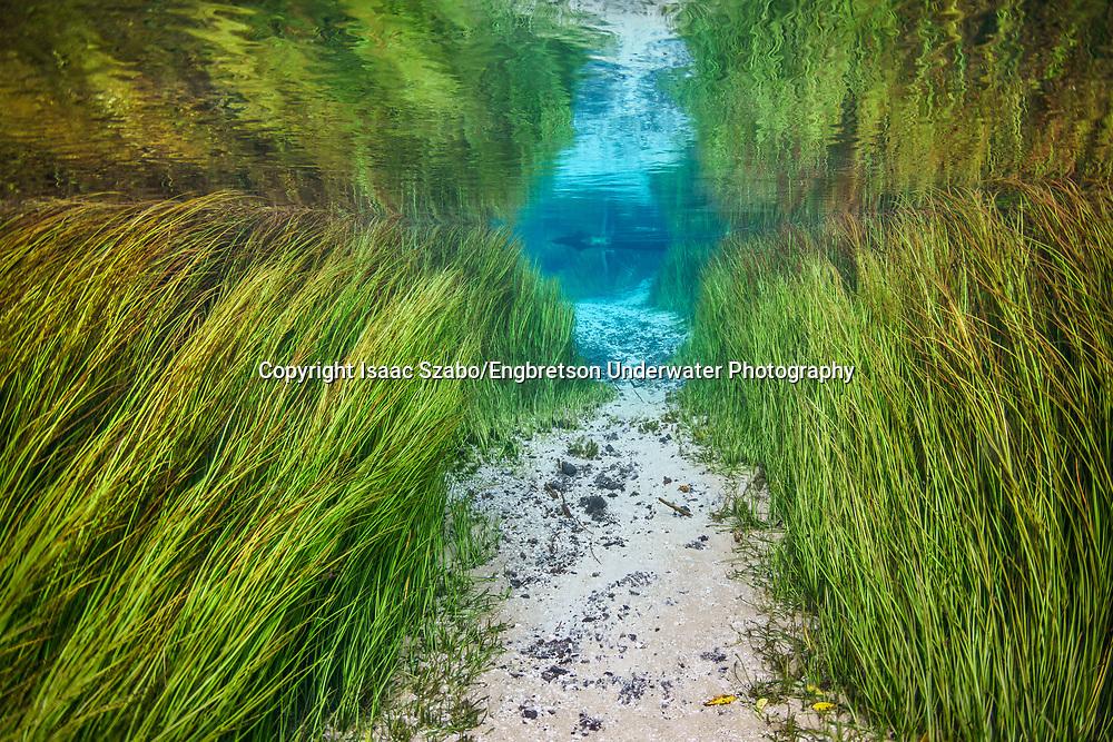 Underwater Scene <br /> <br /> Isaac Szabo/Engbretson Underwater Photography