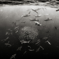 Images from Isla del Coco, Costa Rica. Created during an expedition in 2016 aboard the Argo.