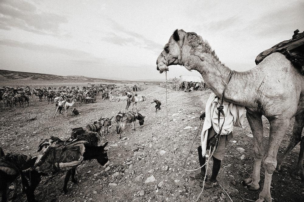 Hamed Ela Dallol, Africa, East Africa, Ethiopia, Etiopia, Horn of Africa, danakil depression, dancalia, Dallol, Ahamed Ela, Hamed Ela, salt, caravan, camel, mine