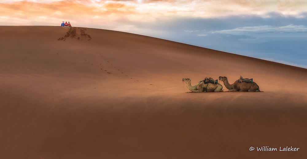 Berbers sit peacfully with camels below as sunrises on the sahara desert dunes.