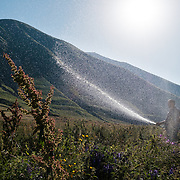 Vakhtangi Tsutskiridze watering vegetables in the Truso Valley, near the border with occupied territory of South Ossetia in the Mtskheta-Mtianeti region of Georgia, on 29 July 2017. His sister is a nun who lives in a tiny abbey in the otherwise abandoned valley, and he was visiting and helping out during the summer.