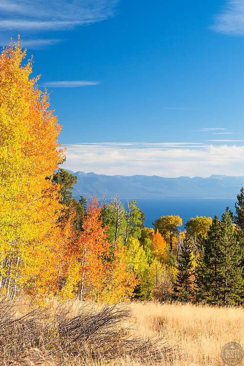 """Aspens Above Lake Tahoe 1"" - Photograph of yellow, orange, red, and green fall colored aspens above a blue Lake Tahoe."