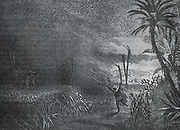A swarm of locusts in North Africa. Engraving