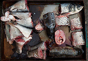 A recently chopped up fish is seen for sale in the market of an old Shanghai neighborhood.