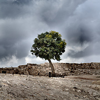 Single Tree on Citadel Hill in Amman, Jordan<br /> The Hill of the Citadel in Amman, Jordan, can trace its history back to the New Stone Age or the Neolithic period around 7500 BC. Once named Rabbath Ammon, it was attack by King David of Israel in the 10th century BC and was subsequently ruled by many Middle Eastern powers. In the third century BC, it was called Philadelphia after a Ptolemaic ruler. Today, the mostly Roman ruins include the Temple of Hercules, a Byzantine church and a mosque.  On the pinnacle of this historic hill or jabal stands a single, stoic tree that grows in solid rock and is a sentry to current history.