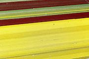 Nederland, Flevoland, Gemeente Noordoostpolder, 07-05-2015; landarbeiders aan het werk in de bollenvelden met tulpen aan de kustlijn van de Noordoostpolder, ten zuidoosten van Urk.<br /> Laborers at work in the bulb fields with tulips on the coastline of the Northeast Polder.<br /> <br /> luchtfoto (toeslag op standard tarieven);<br /> aerial photo (additional fee required);<br /> copyright foto/photo Siebe Swart
